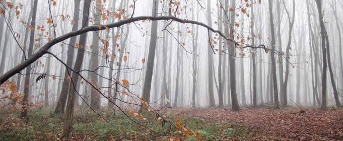 Погода в Україні на середу, 25 листопада
