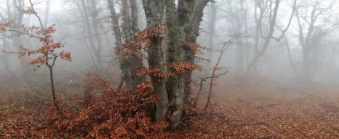 Погода в Украине на пятницу, 27 ноября