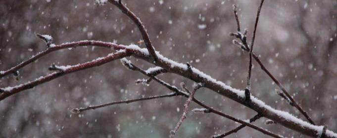 Погода в Україні на вівторок, 1 грудня