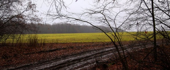 Погода в Украине на пятницу, 4 декабря