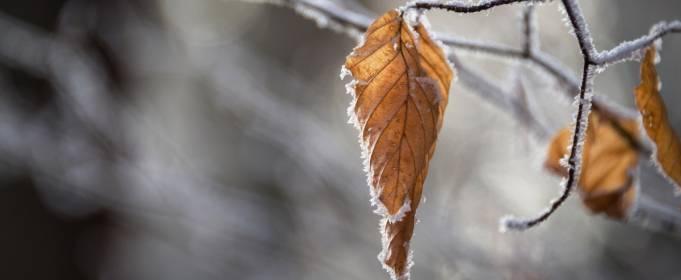 Pogoda w Polsce na 11.12.2020
