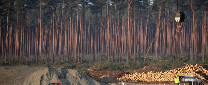 Немецкий суд разрешил Tesla частично вырубить лес для строительства нового завода