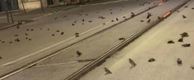 В Риме сотни птиц погибли в результате новогодних фейерверков