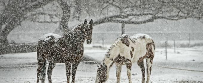 В Европе бушует непогода: снегопады, мороз и гололед обрушились на страны