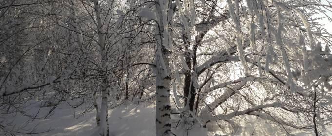 Погода в Украине на четверг, 14 января