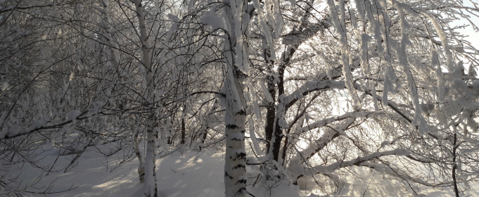 Погода в Україні на четвер, 14 січня