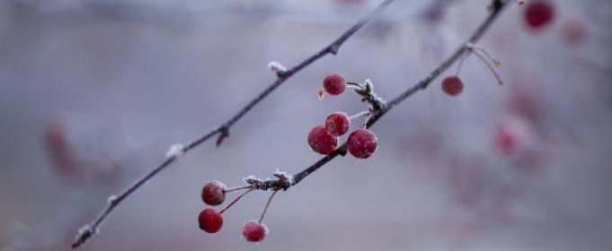 Погода в Украине на вторник, 19 января