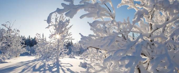 Погода в Україні на середу, 20 січня