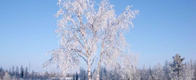 Погодні прикмети на 23 січня