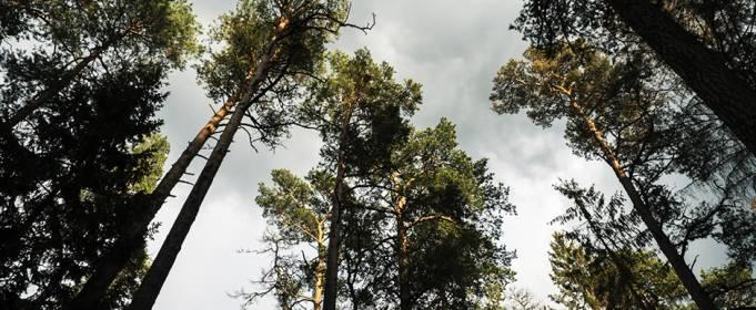 Растения начнут хуже удерживать углерод из-за высоких температур