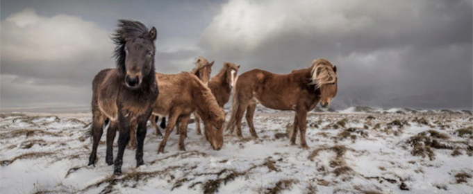 Объявлены победители конкурса «Лучший фотограф-путешественник 2020»