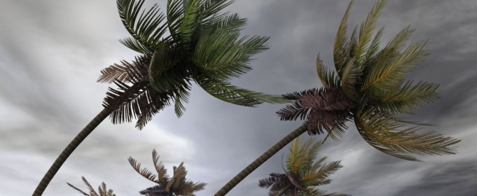 ВИДЕО. Сильнейший ветер сносит все на своем пути