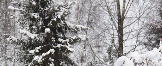 Погода в Украине на воскресенье, 21 февраля