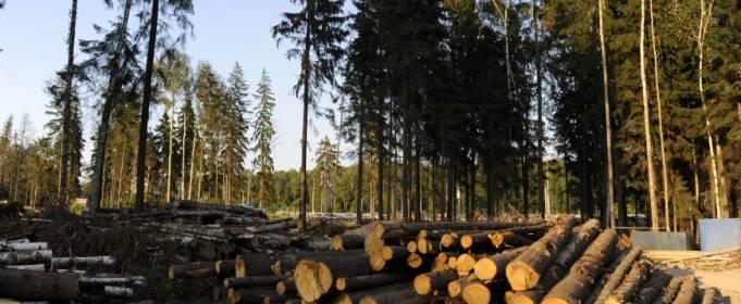 Вырубка лесов может «охладить» планету