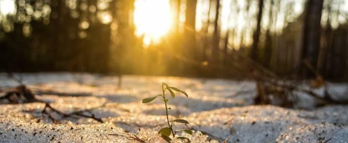 Погода в Україні на вівторок, 2 березня