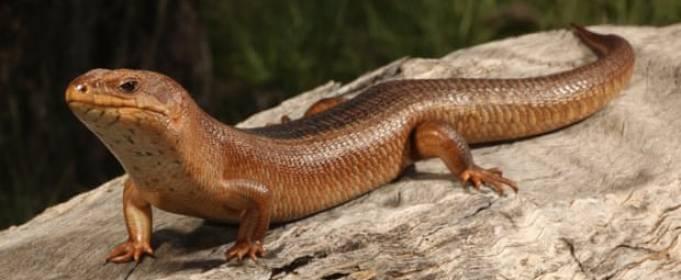 Австралия сообщила об исчезновении 13 видов эндемичных животных