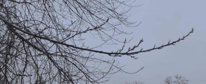 Погода в Украине на четверг, 8 апреля