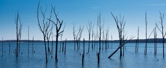 На США наступають мертві «ліси-примари»