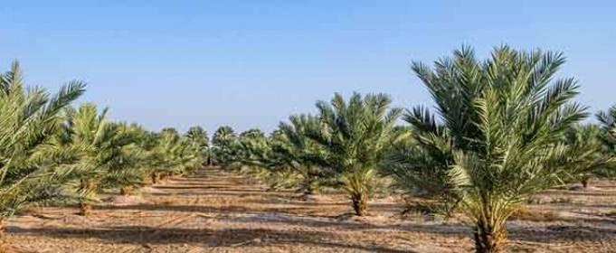Саудовская Аравия объявила о борьбе с потеплением