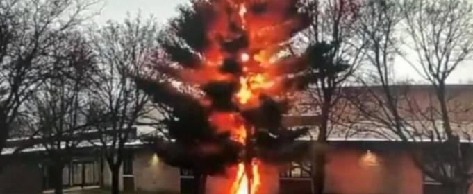 ВИДЕО. В штате Висконсин удар молнии «срубил» дерево