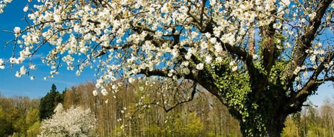 Погода в Украине на понедельник, 12 апреля