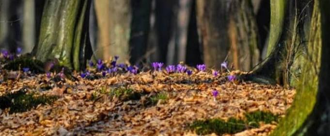 Погода в Україні на вівторок, 13 квітня