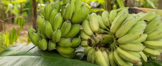 Світу напророкували дефіцит чіпсів і бананів