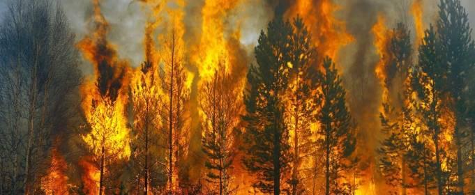 Вчені навчилися прогнозувати лісові пожежі