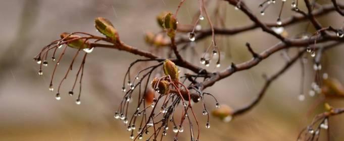 Погода в Украине на пятницу, 23 апреля