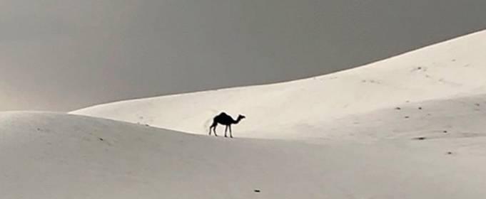 ВИДЕО. Небывалая погода в Саудовской Аравии