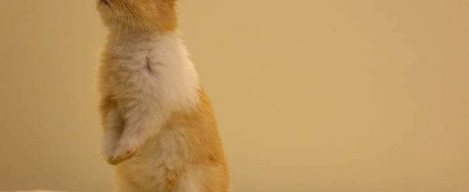 Китайський гороскоп на травень: Кролик