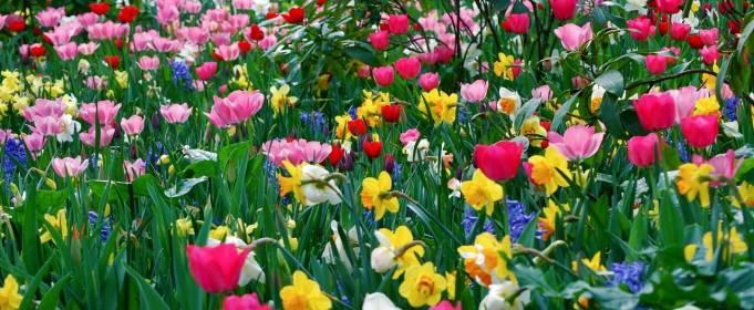 Погода в Украине на воскресенье, 9 мая