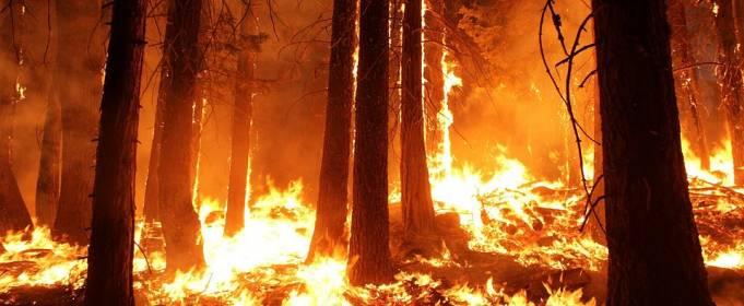 В Украине объявлен высокий уровень пожарной опасности