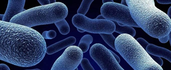 Найден способ бороться с устойчивыми к антибиотикам бактериями