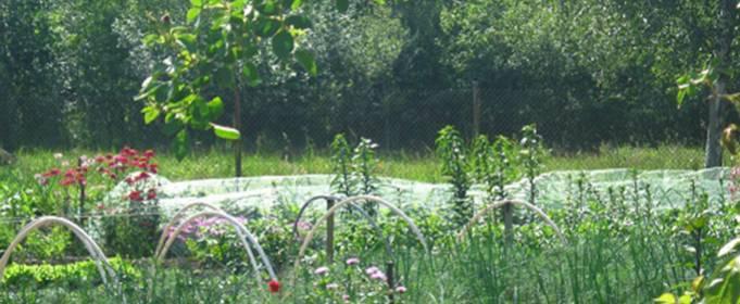 Місячний календар городника і садівника на червень 2021 року