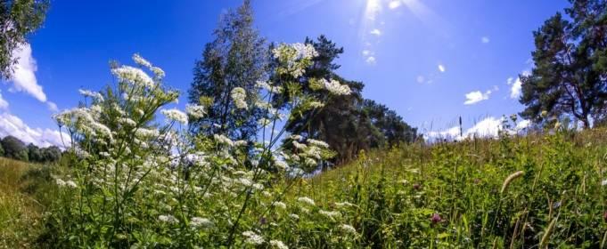 Погода в Україні на п'ятницю, 25 червня