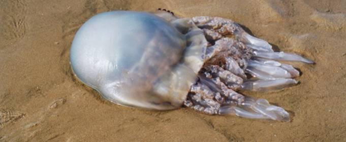Ученые объяснили причину появления огромного количества медуз в Азовском море