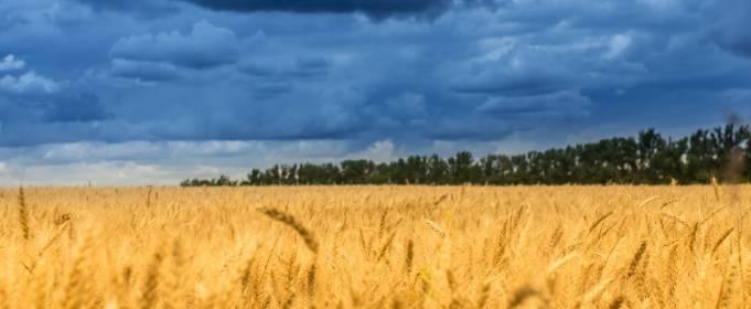 Погода в Украине на четверг, 29 июля