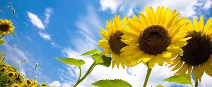 Погода в Україні на п'ятницю, 30 липня