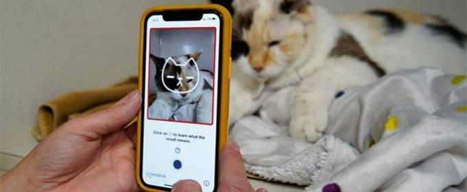 Новий додаток допоможе визначити, чи щаслива ваша кішка