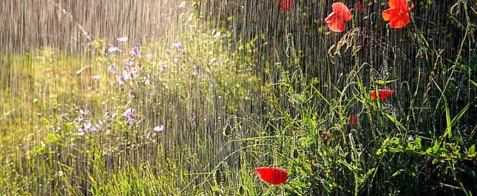 Погода в Украине на понедельник, 2 августа