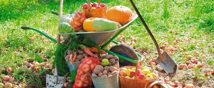 Лунный календарь огородника и садовода на сентябрь 2021 года