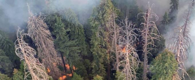 Лесные пожары угрожают самым высоким деревьям в мире