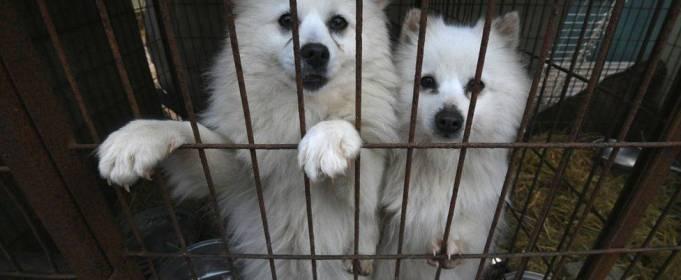 В Южной Корее предложили запретить употребление собачьего мяса