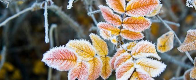 В ближайшие дни в Украине ожидаются заморозки