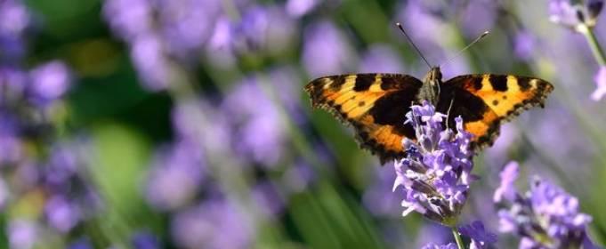 В Великобритании сократилось количество бабочек