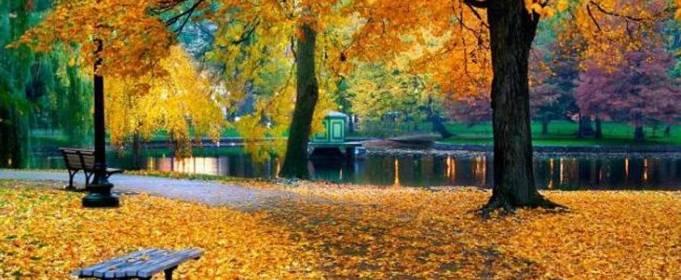 Погода в Украине на четверг, 14 октября